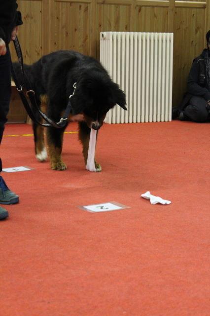 Duke findet den Socken zu klein...