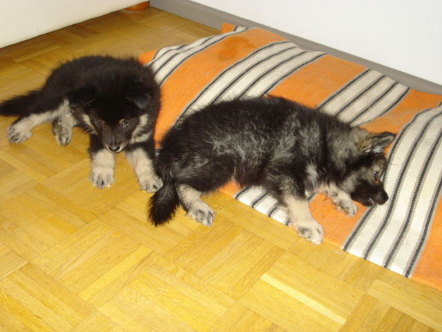 Rex und Rilla