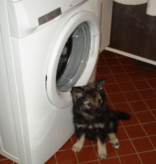 """""""frisch gewaschen"""""""