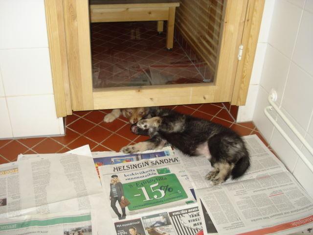 Rilla möchte auch in die Sauna ;-))