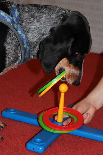 Lucky testet das Ringspiel