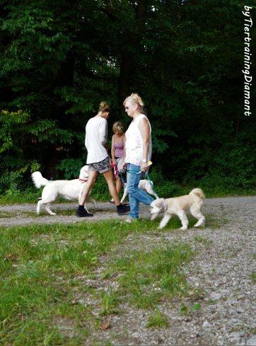 Alltagstraining-Hundebegegnungen