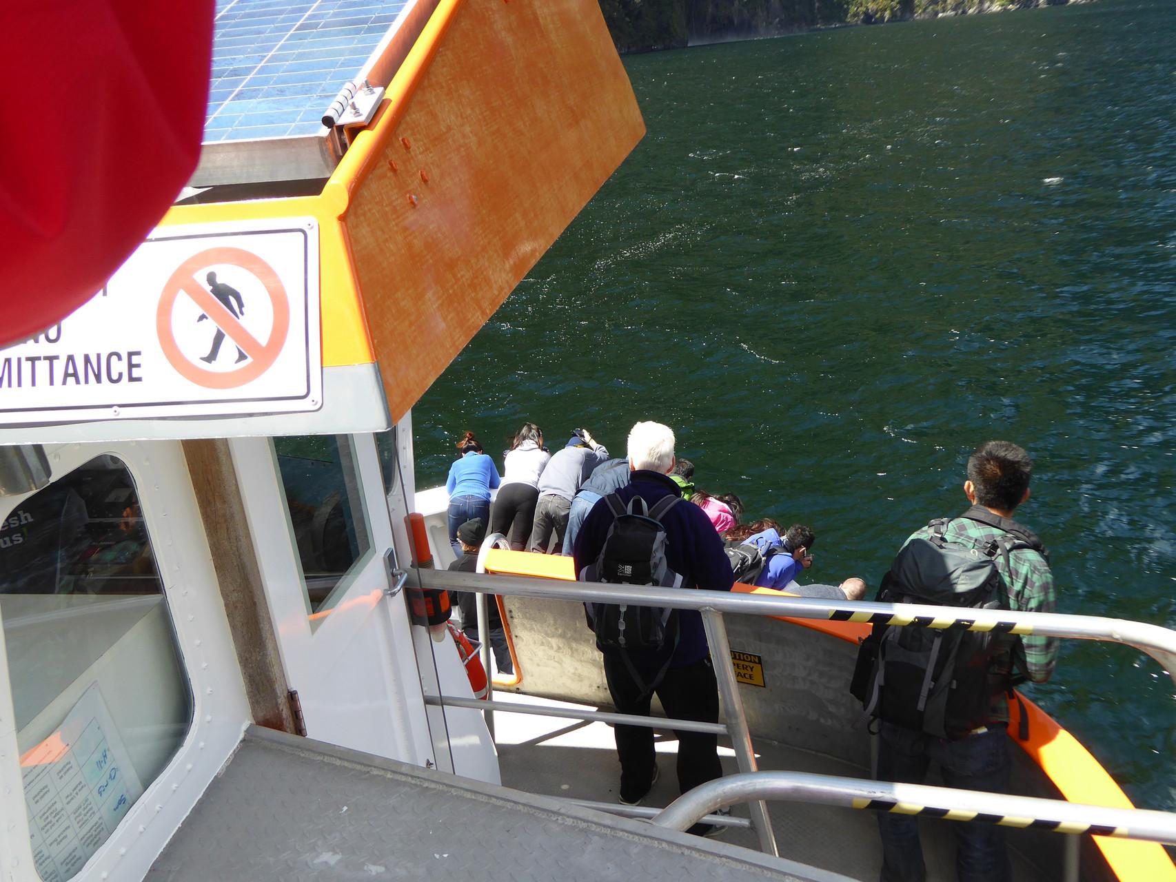 Ein Delphin begleitet uns und schwimmt ständig vor dem Schiff her