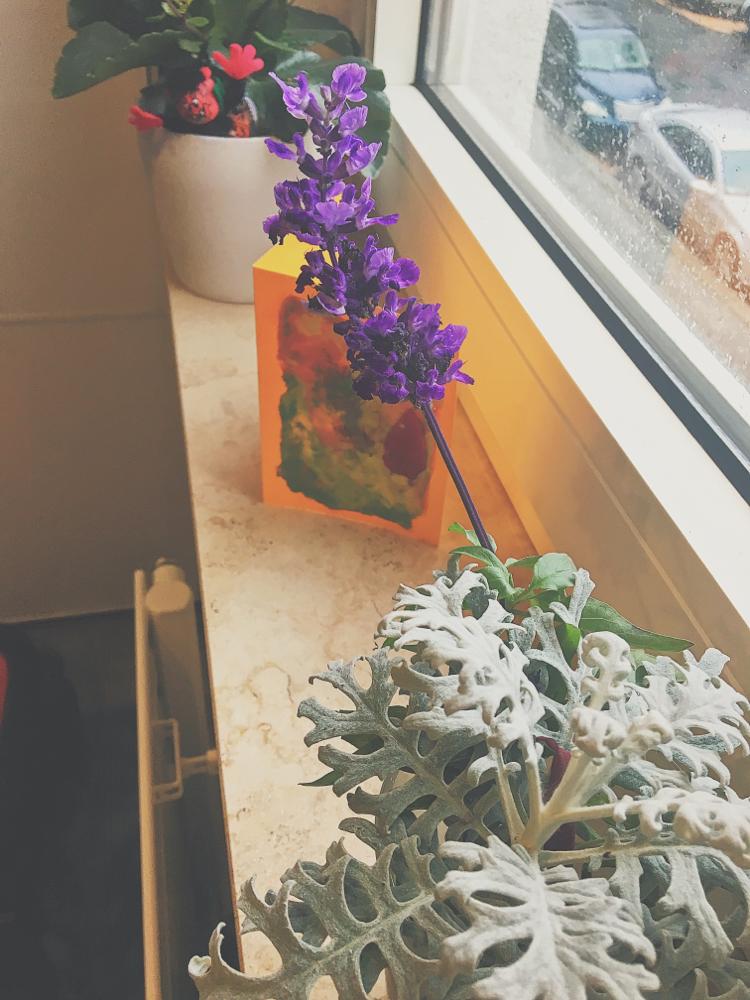 Luka's gepflückte Blumen im Glas, eine von ihm  selbst-aquarellierte Karte und ein Blumentopf zur Pflege