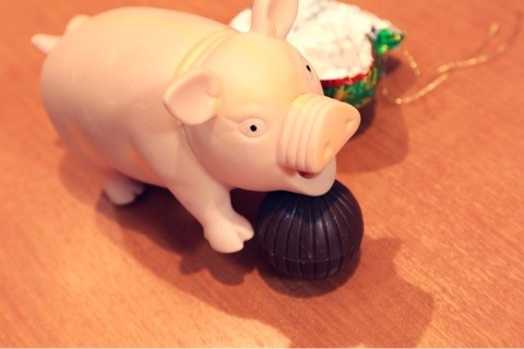 舞鶴 西舞鶴 美容室 美容新 豚 豚鼻