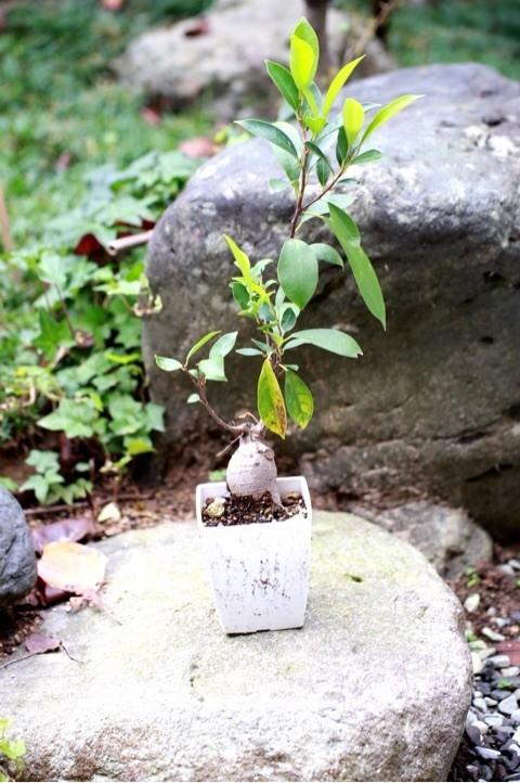 舞鶴 西舞鶴 植物 緑 きれい 健康 いきいき プライベートサロン