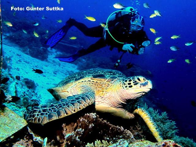 Tauchsport und Unterwasserfotografie