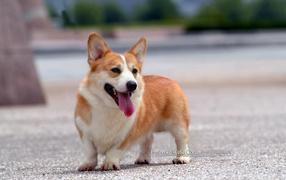 addestramento cani Viareggio , Versilia , agility dog Viareggio , educazione cinofila , addestratore ENCI , corso agility dog versilia , tricks , socializzazione , cuccioli , pisa , lido di camaiore , cane
