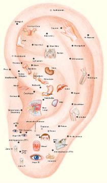 Welche punkte akupunktur zum rauchen aufhoren