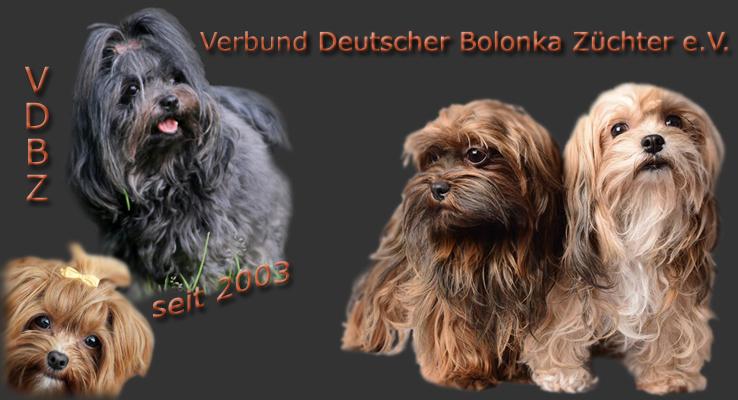 Verbund Deutscher Bolonka Züchter e.V.