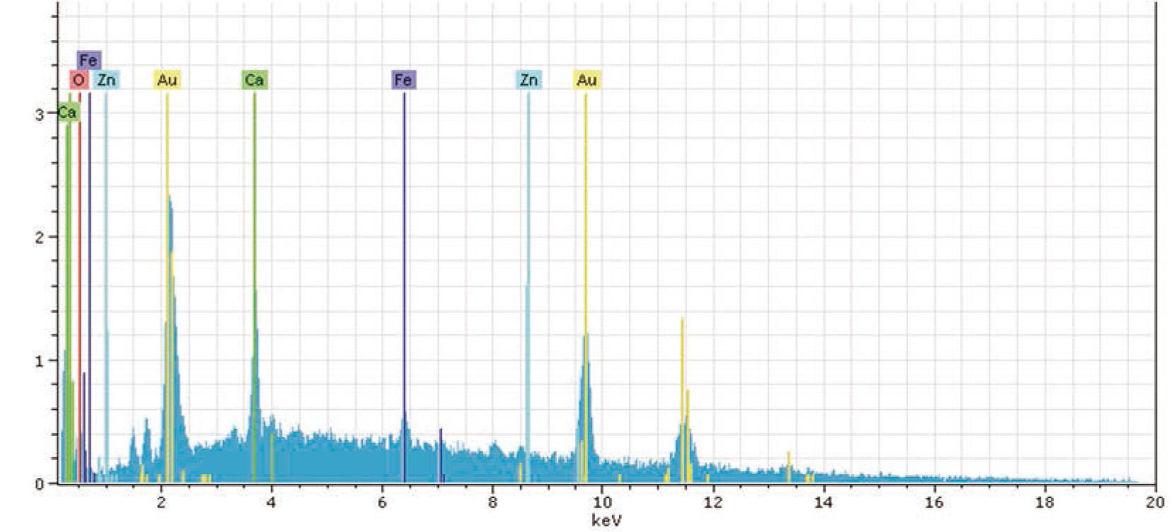 Abb. 5: EDX-Analyse, aufgebrochene Epidermis eines Exemplares von Cocoonimorpha buechleri.