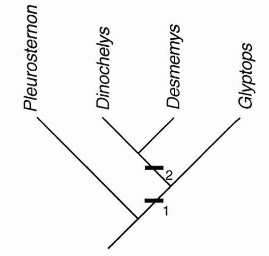 Figure 2: Cladogramm according Brinkman et al. (2000: fig. 5) showing the relationships of Desmemys and Dinochelys. (...)