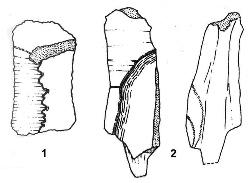 Figure 3: DFMM 853 from layer 73 (middle Kimmeridgian) of Langenberg near Oker according Karl et al. (2007: fig. 10).