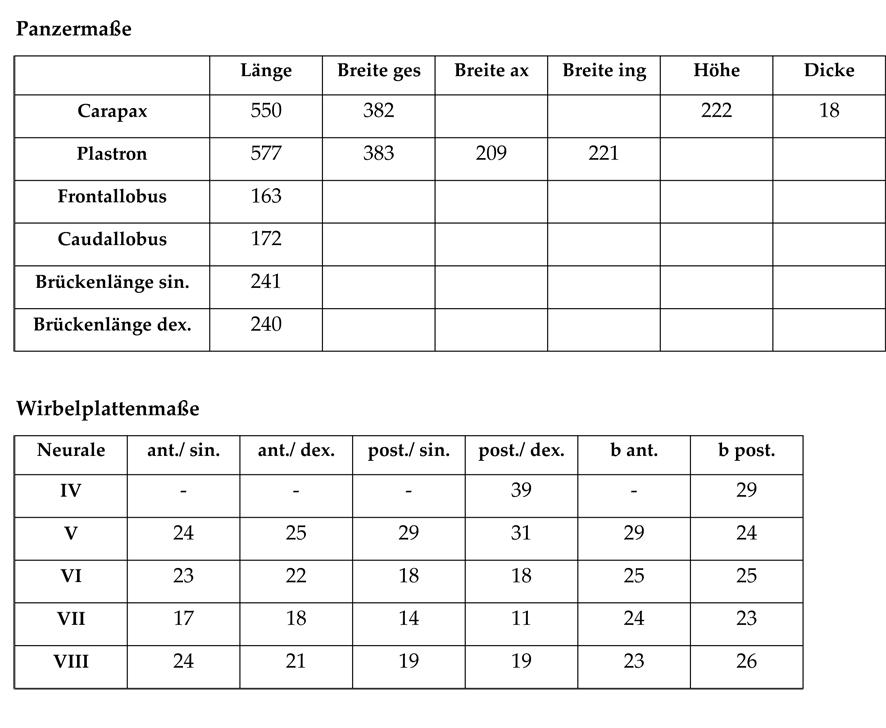 Tabelle 2: Maße des Holotypus HNS P-00375 von Eochersina steinbacherae (Karl, 1996); alle Angaben in Millimetern.