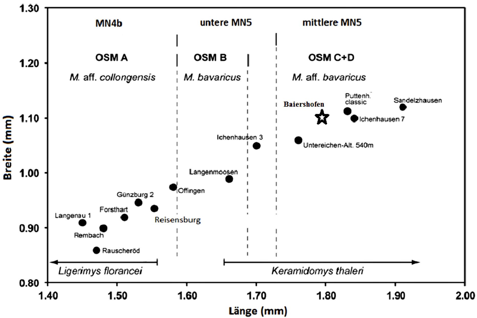 Abbildung 4. Längen-Breiten-Diagramm der unteren ersten Molaren der Megacricetodon-Entwicklungslinie. Die schwarzen Kreise stellen die Populations-Durchschnittswerte der einzelnen Lokalitäten dar. (...)