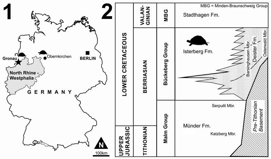 Figure 1: (1) Map of the type locality for Desmemys bertelsmanni at Gronau (Westfalen), Germany (asterisk), together with neighbore pertinent sources of fossil turtle material. (2) Lithostratigraphy (...)