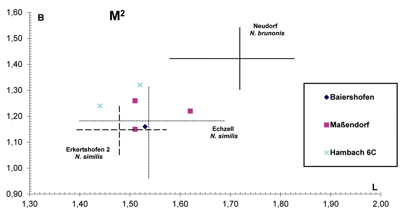 Abbildung 3. Längen-Breiten-Diagramm des M2 von Neocometes aus Baiershofen. Zum Vergleich sind die Werte/Streubereiche von N. similis von Erkertshofen 2 (MN 4) und Echzell (MN 4), (...)