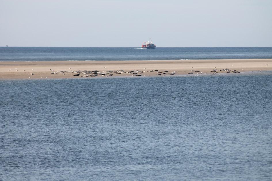 Robben-Sandbank