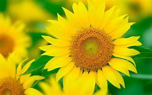外側も内側も花の集まり