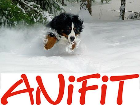 Hundesalon Pfötli - Dekorationsfoto Hundefutter Anifit
