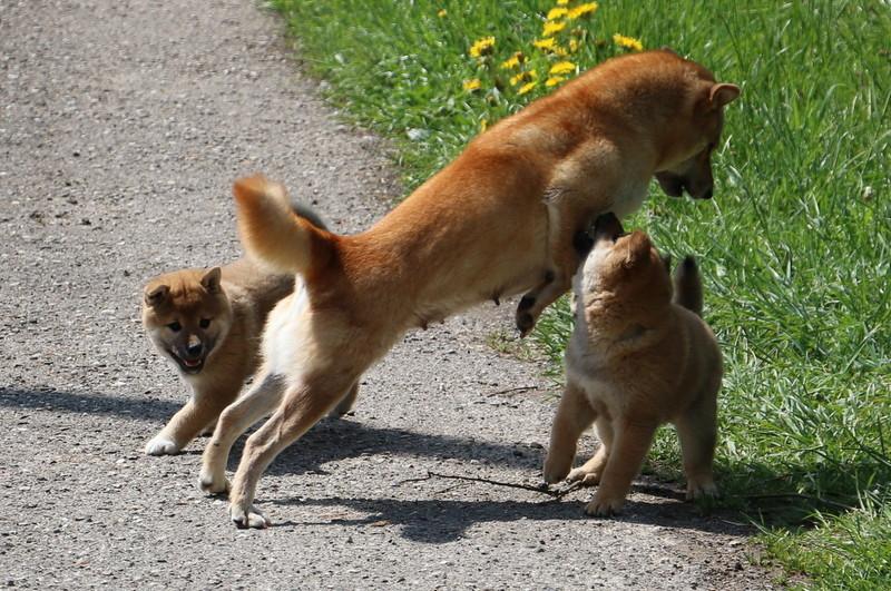 Mama auf der Flucht