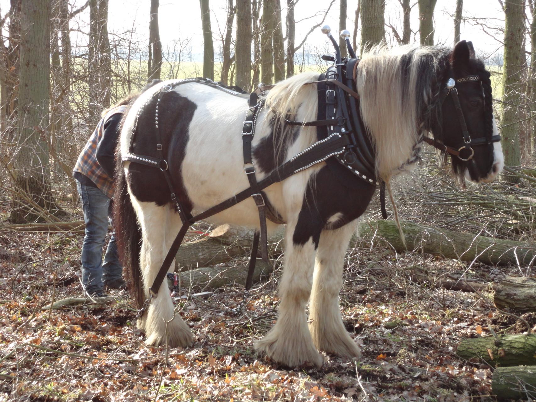 Mit unseren Pferden im Holz