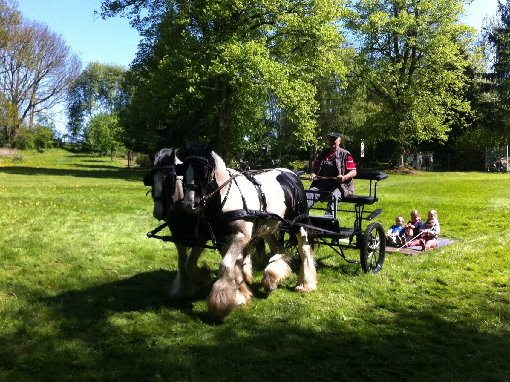 fliegender Teppich mit Pferden