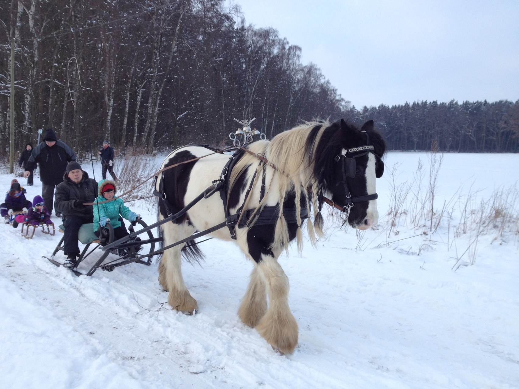 Schlittenfahrt mit Pferden