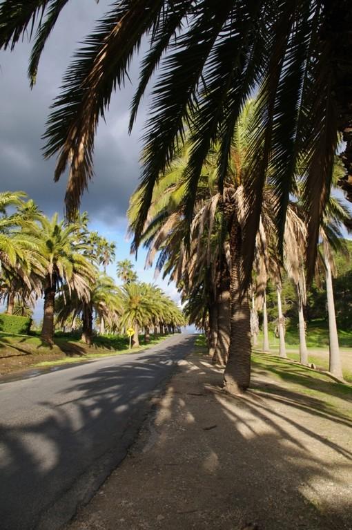 Palmtree Alley