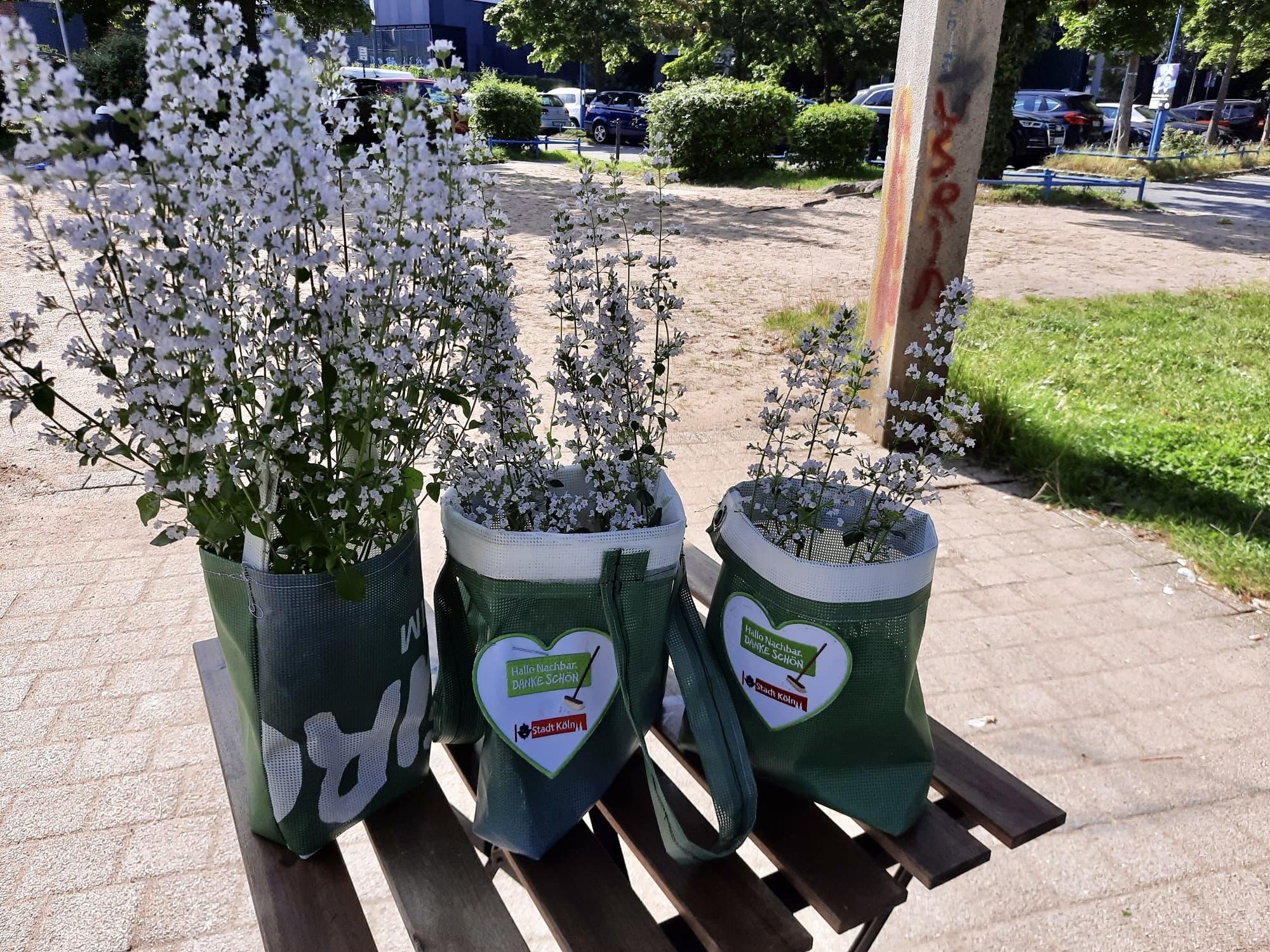 Pflanzen in der DIY Tasche