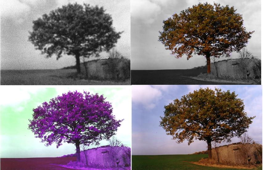 POPART tree