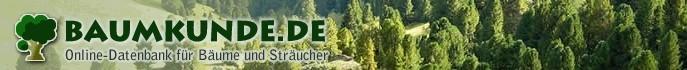 Baumkunde.de bietet eine umfangreiche Gehölz Datenbank mit über 650 einheimischen und exotischen Baumarten.