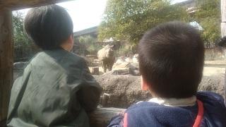 天王寺動物園でサイを見る兄弟