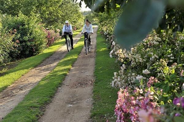 Rosenroute mit dem fahrrad