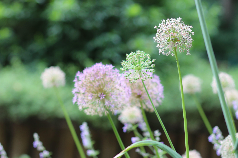 Blüten aus dem Blindengarten