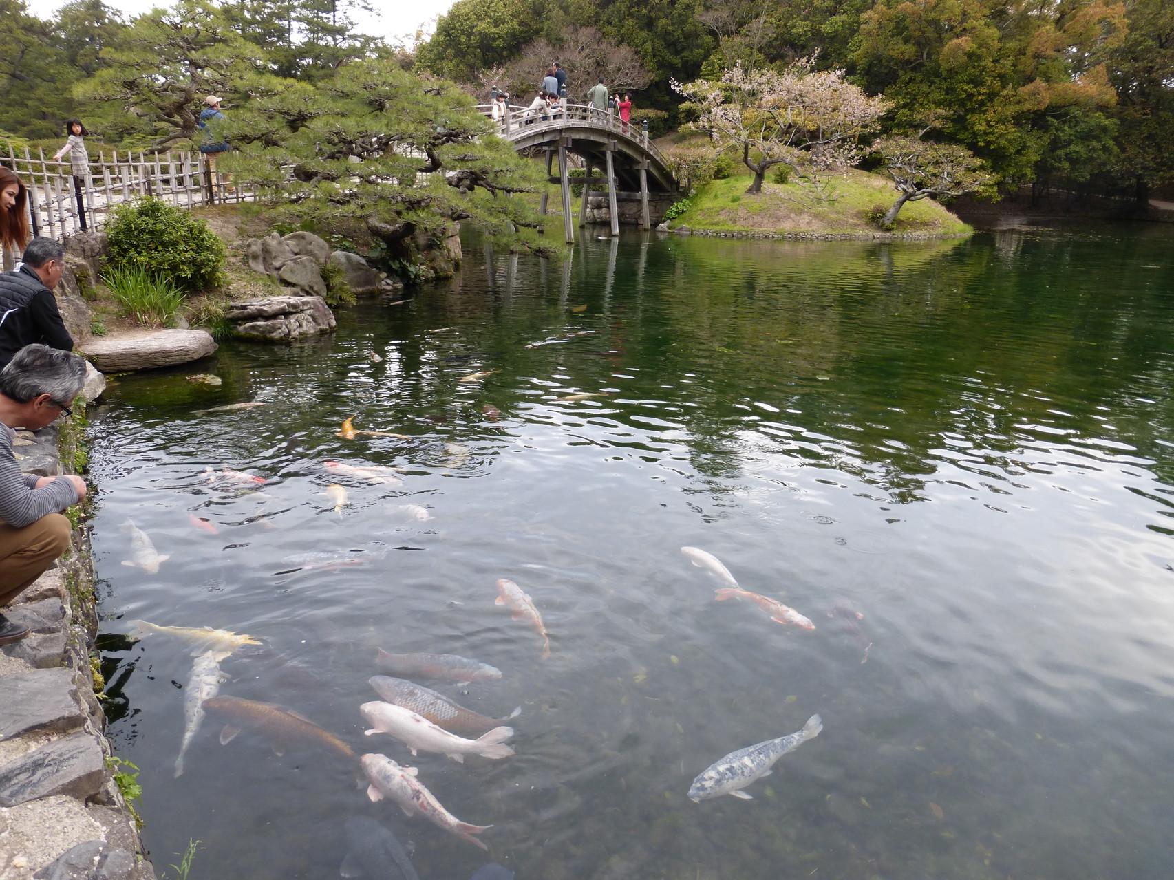 Ritsurin Park  Takamatsu/Japan