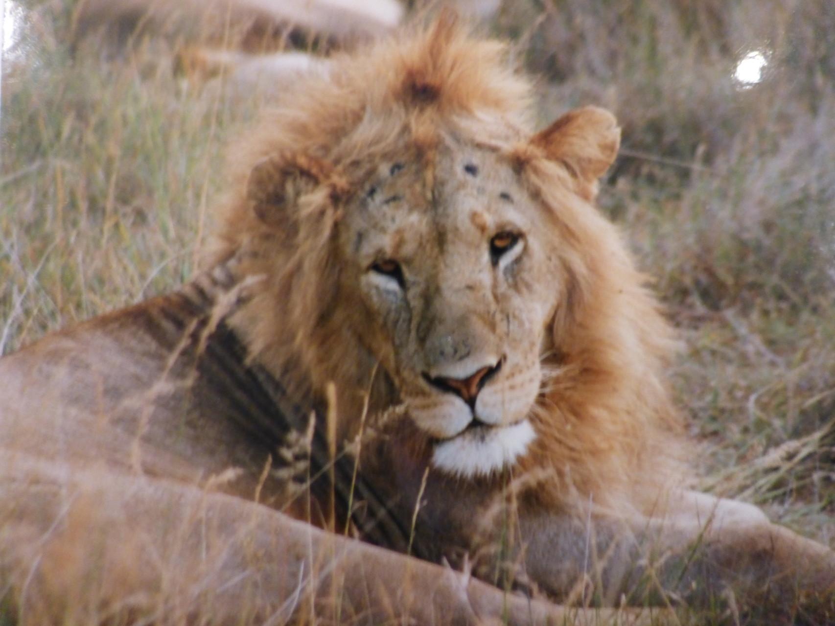 Masai Mara- Kenia