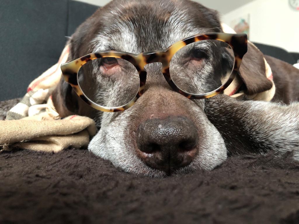 LoL Heartbreaker Travis macht auch mit Brille eine gute Figur