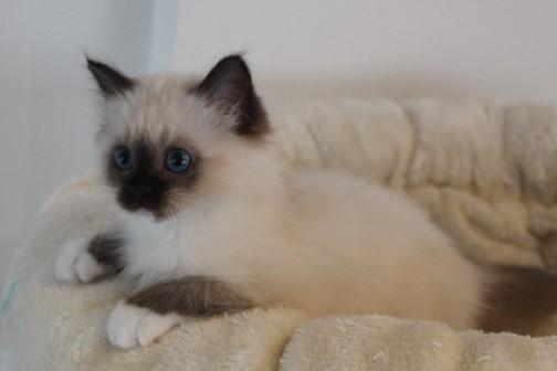 Toockie vom Lilienweg, 12 Wochen alt