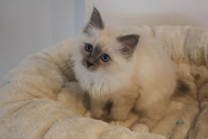 Tamia vom Lilienweg, 12 Wochen alt