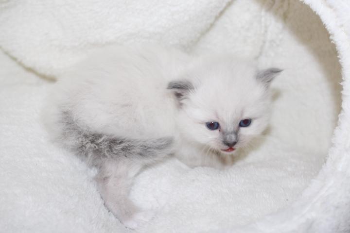 Tamia vom Lilienweg, 4 Wochen alt