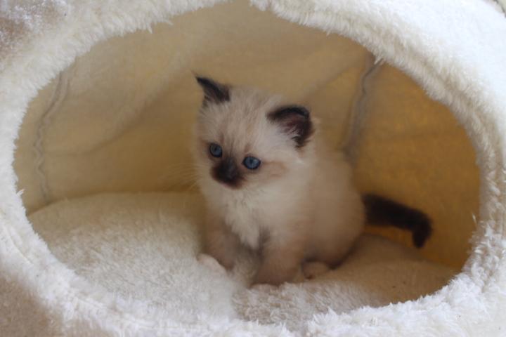 Toockie vom Lilienweg, 7 Wochen alt