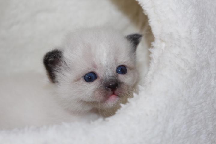 Toockie vom Lilienweg, 4 Wochen alt