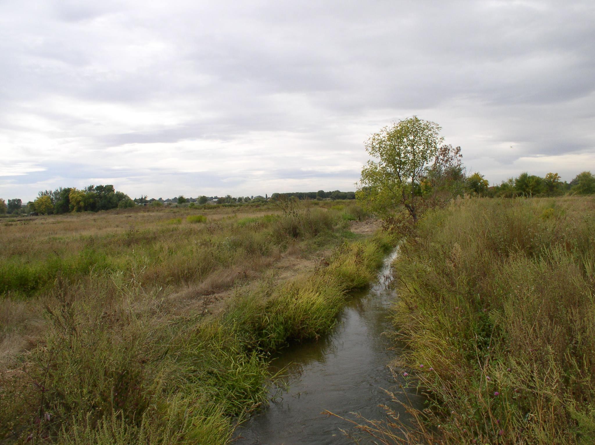 Bird field with creek.