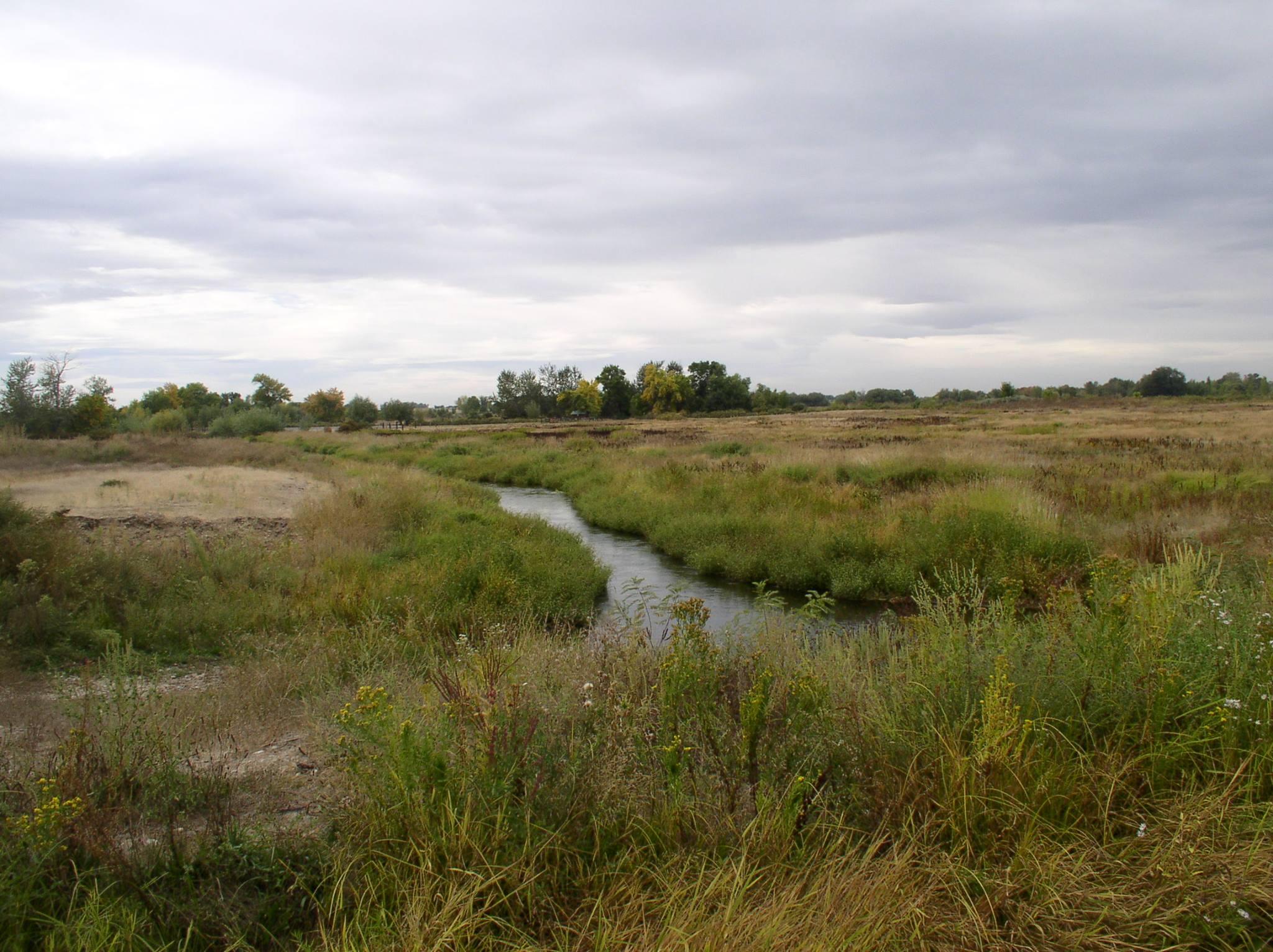 Bird fields split by creek.