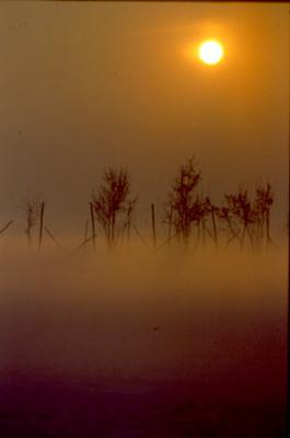 Pro Loco Sissa - Inverno filare di viti fra la nebbia