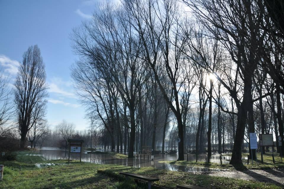 Pro Loco Sissa - Po in piena - Parco Borchi Maria Luigia (foto G.Chezzi)
