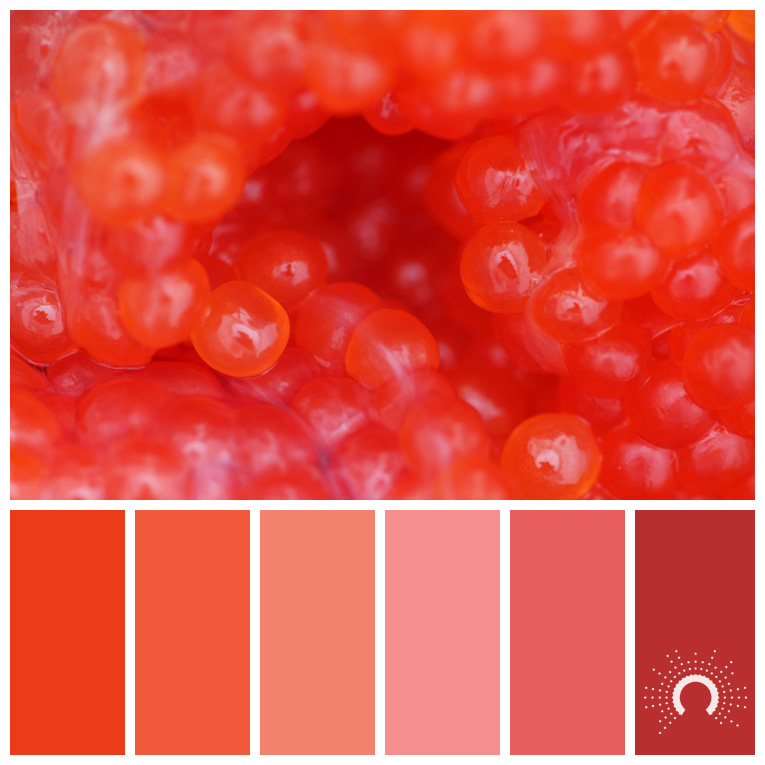 color palette, color combination, Farbpalette, hue, red-orange, rotorange