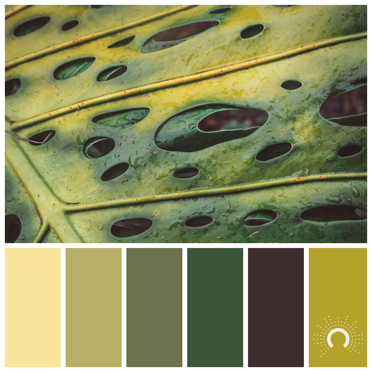 color palette, color combination, color combo, Farbpalette, hue, yellow-green, green, yellow, red, brown