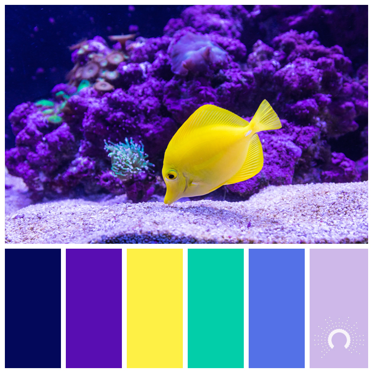 Color Inspiration Yellow Tang